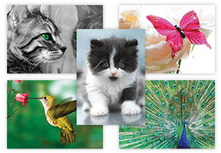 Animal Kindgom Postcards