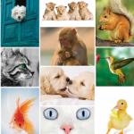 Animal Kingdom Shop