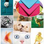 Animal_kingdom_Home_envelope