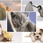 Cuddly Creatures Postcards