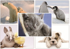 Cuddly Creatures Postcards
