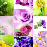 Spring-Flower-Postcards