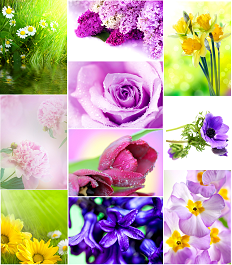 Spring-Flower-Postcards