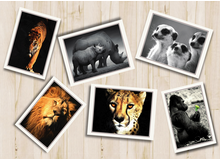 Wild At Heart Postcards