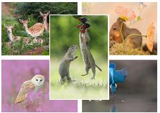 Wild Woodland Postcards