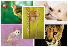Animal Mix 50 Pack